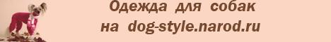Китайская хохлатая собака. Одежда для собак на www.dog-style.narod.ru.